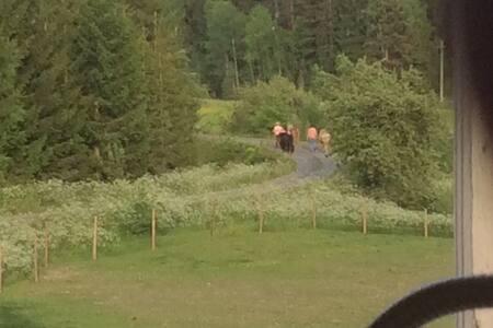Gunbritts Hus - Åtvidaberg
