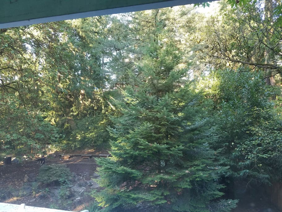 House sits on .50 acre wooded lot