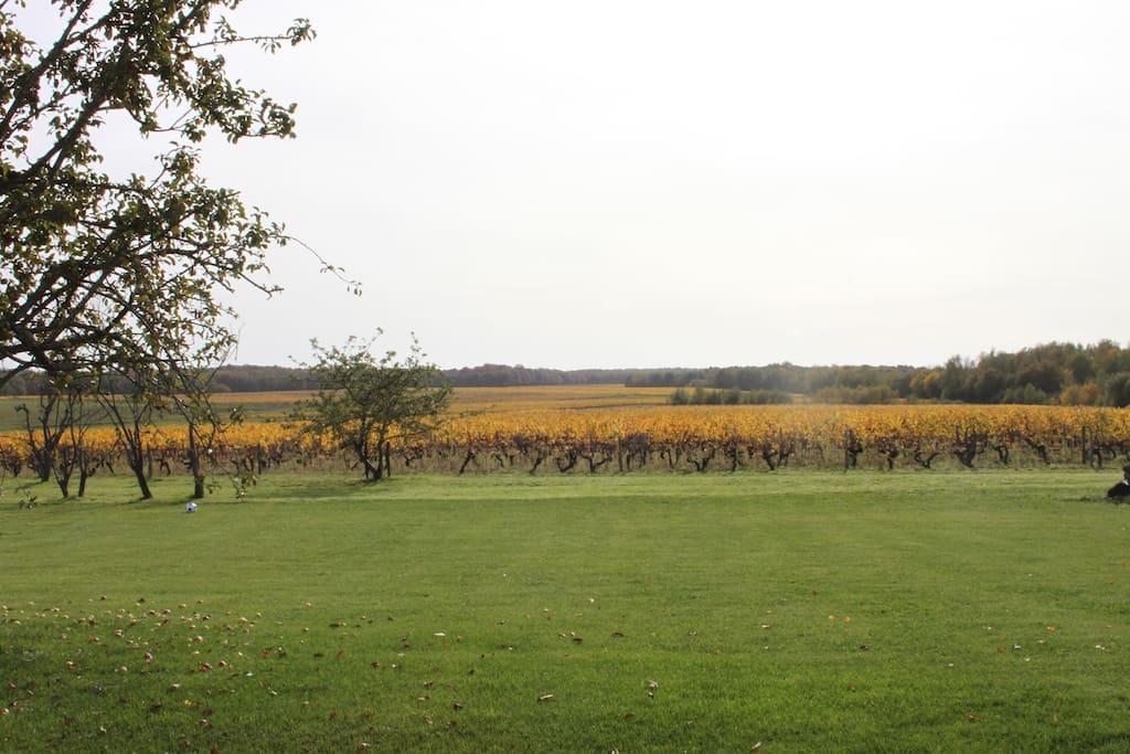 Chambre la campagne pr s de beauval et ch teaux houses for Jardin du nil wine price