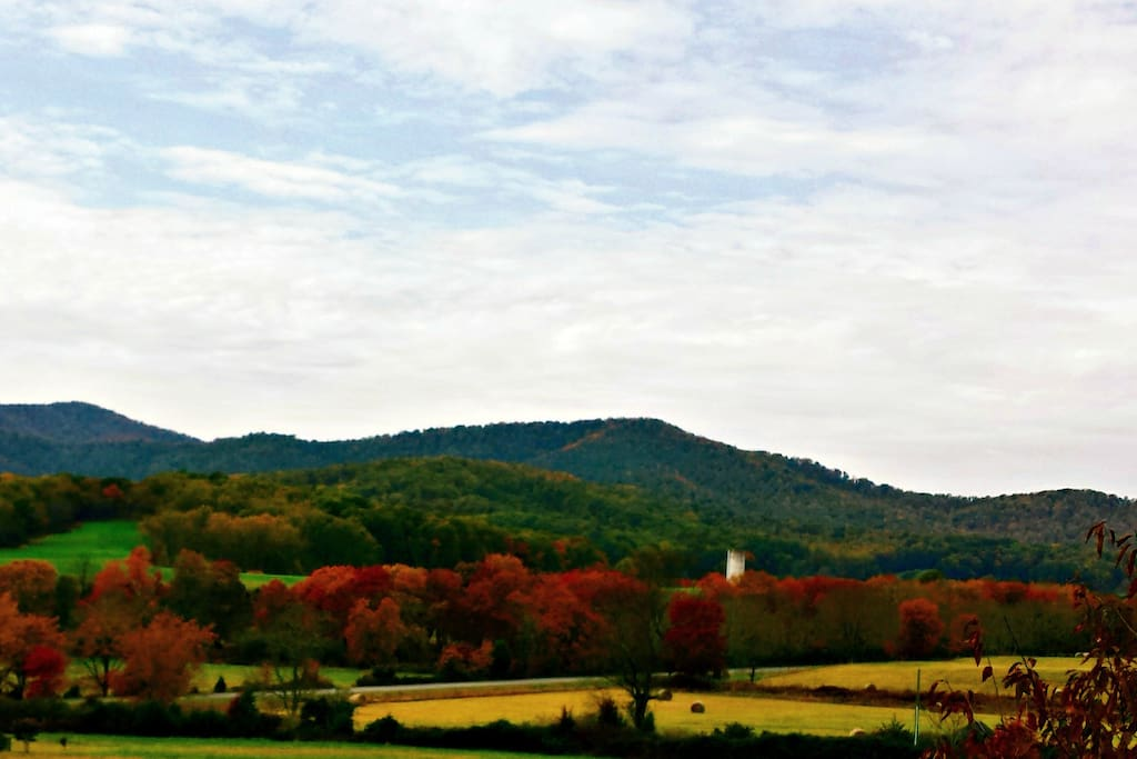 Fall at the on site Vineyard