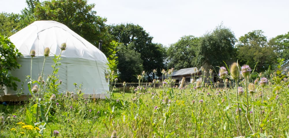 Yurt in a secluded flower meadow - Wootton Bridge - Yurt