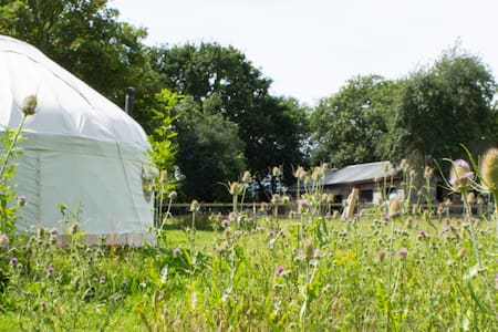 Yurt in a secluded flower meadow - Wootton Bridge