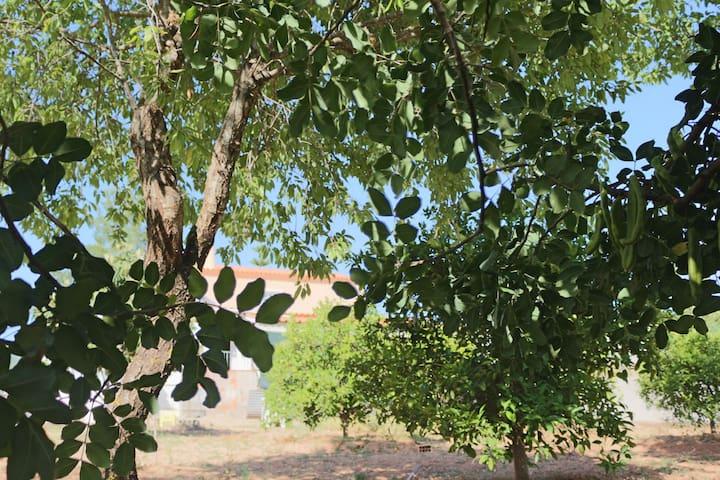 Recanto das Amendoeiras