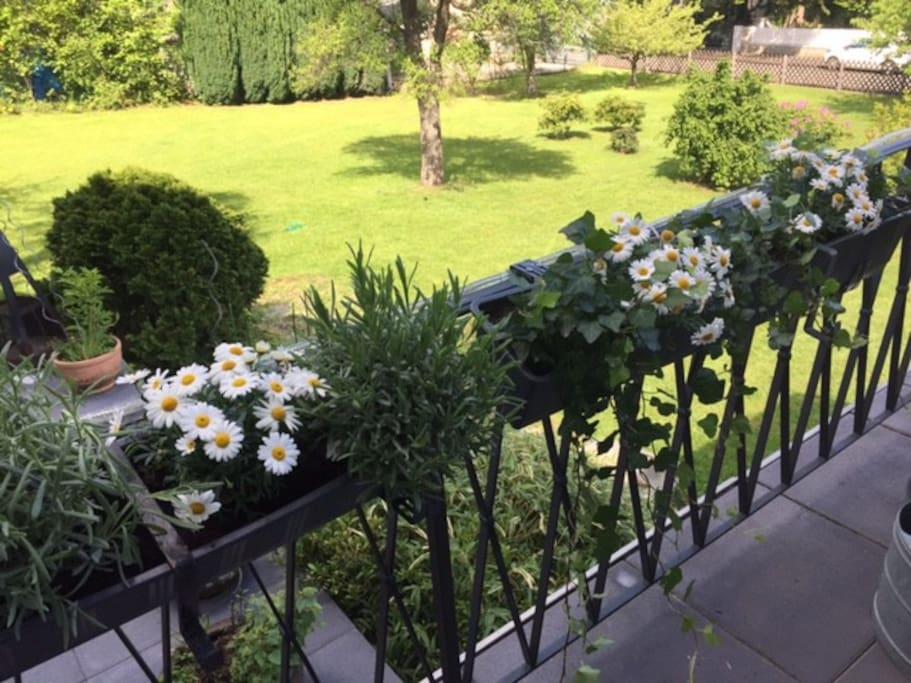 Blick in den Garten aus der Lounge