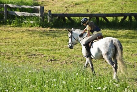 Country Hill Farm Equestrian Vacations - Whitchurch-Stouffville - Другое