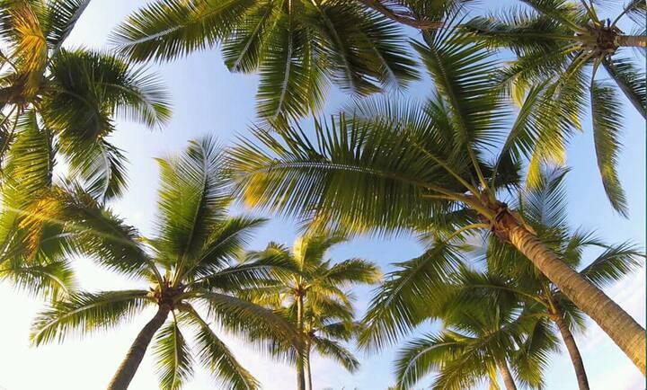 Maui Bay Family Getaway
