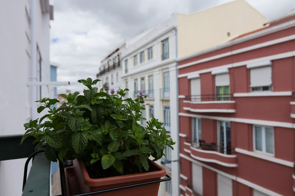 Little balcony with mint, ready to use