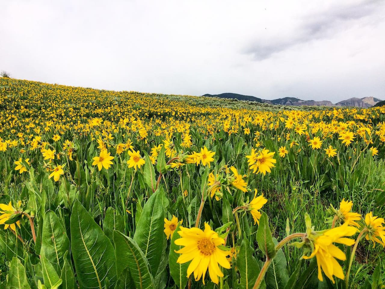 Come see the 2019 Gunnison Valley Super Bloom