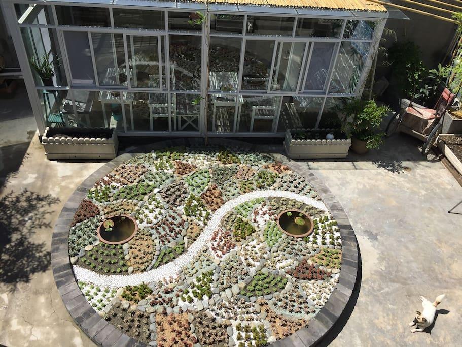 """从二楼工作室看到的院心,中间是""""太极鱼""""图案的多肉花坛,小阿能喜欢在这儿晒太阳。"""
