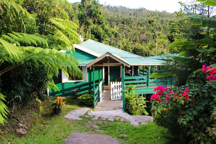 Birdwatchers Rainforest Staycation Cottage
