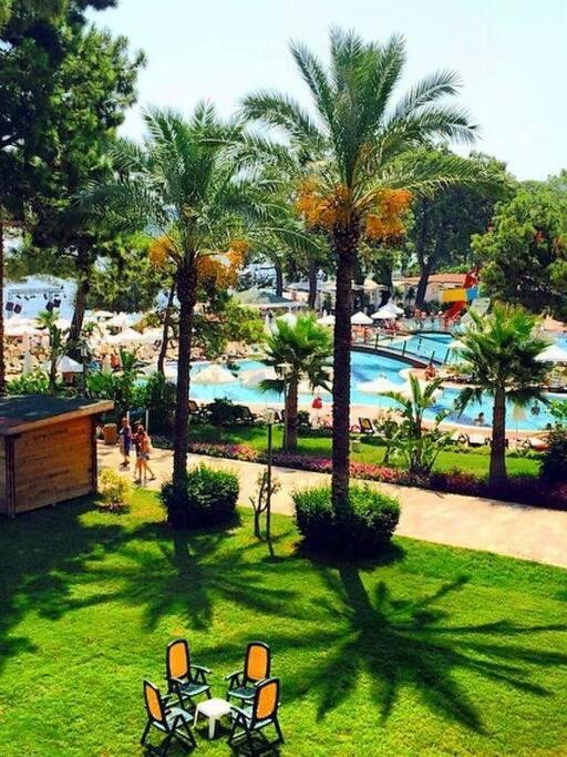 yemyeşil çimler,havuz,palmiye ağaçları ve deniz manzarası