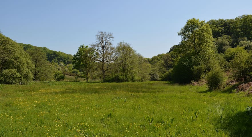 Wild Camping at Aldridge Mill - Streams & Woods