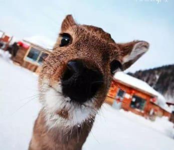 滑雪之家 Ski House - Harbin - Hus