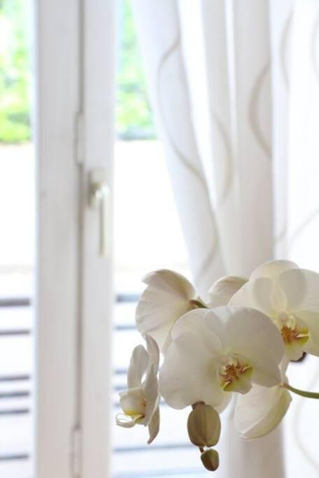 Flowers in the livingroom - Fleurs dans le salon - Blumen im Wohnzimmer