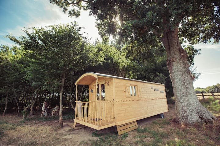 La Chouette Cabane - Roulotte - Pommerieu - Overig