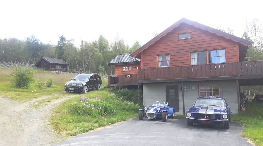 Fjellro i naturskjønne Skurdalen. Nær Skiløyper