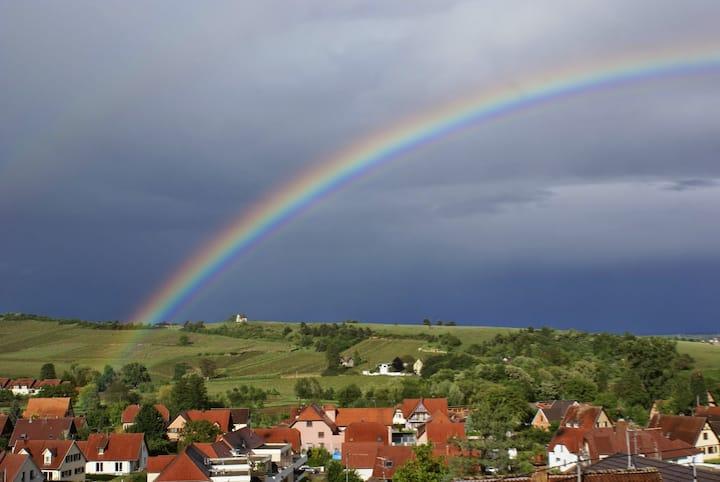 Sur les hauteurs, vue sur le vignoble Alsacien