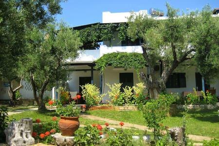 Olive house superior studio