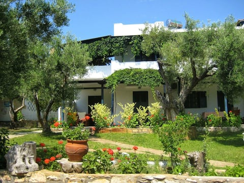 Olive house studio