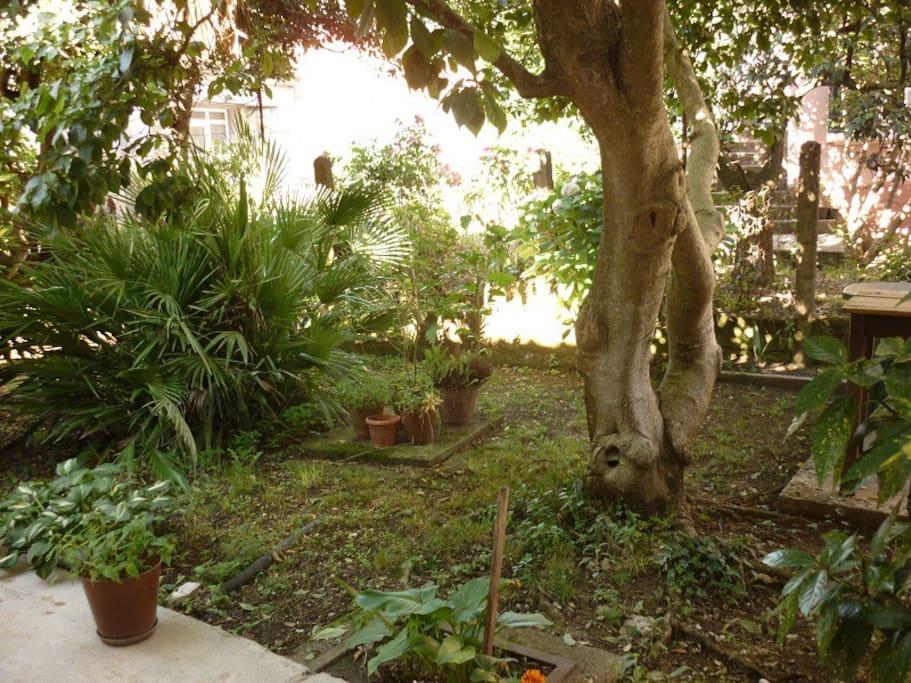 садик с садовой мебелью во второй половине дома