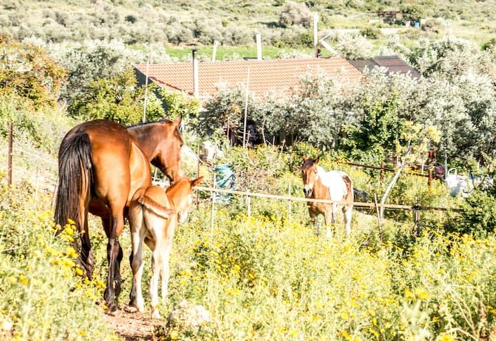 Klil farm stay