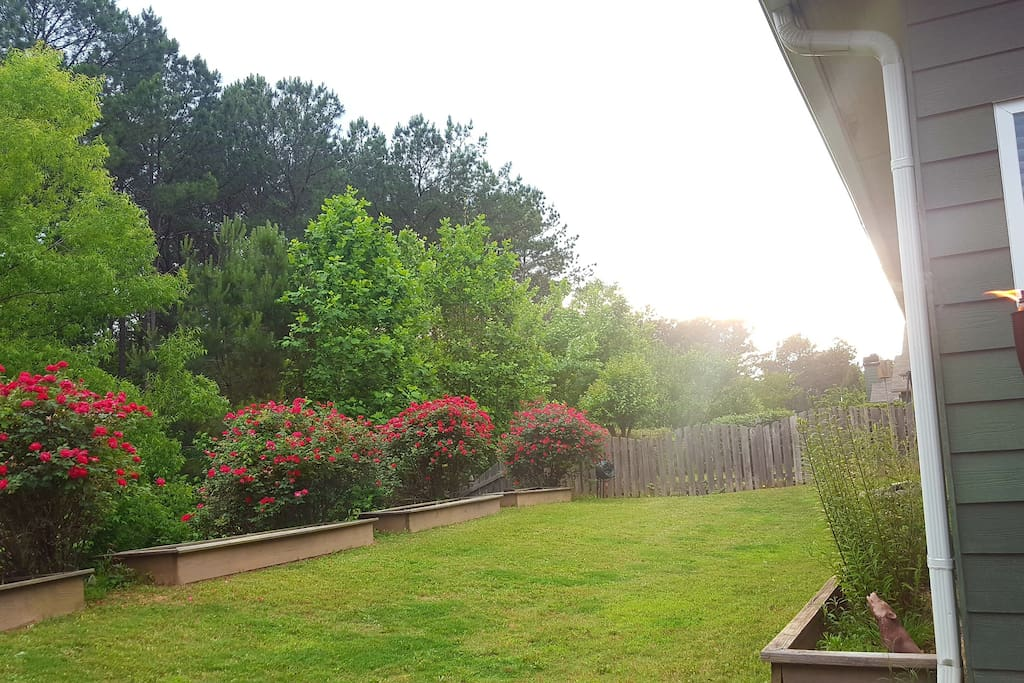 Watch the sun set over a spacious backyard adorned with 4 large rose bushes.