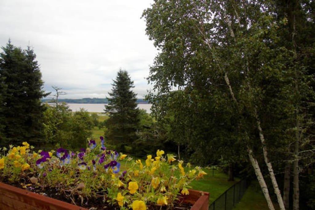 Deck View of the Petitcodiac River