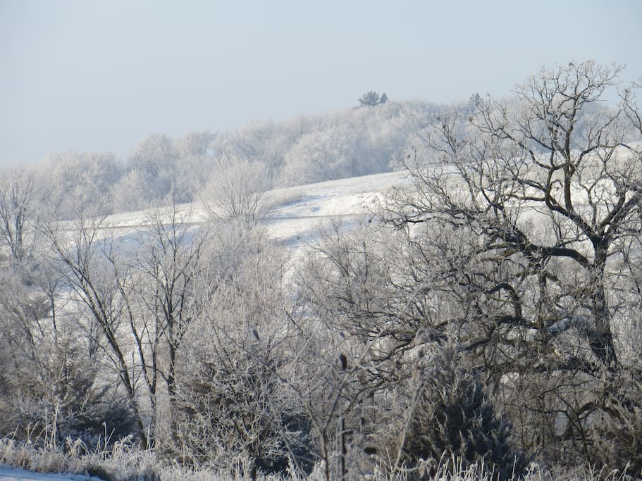 Back yard view after a foggy night - hoarfrost on the trees.