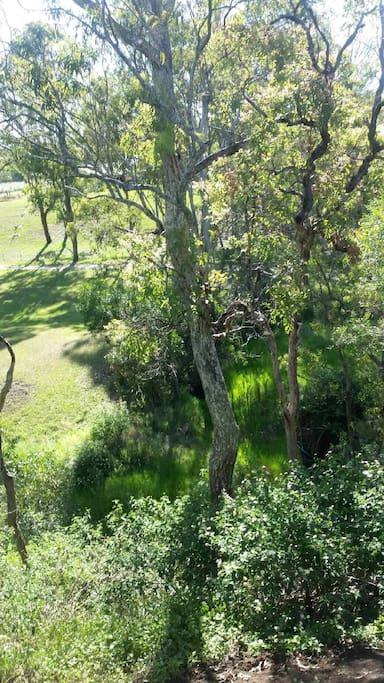 Bushland surroundings