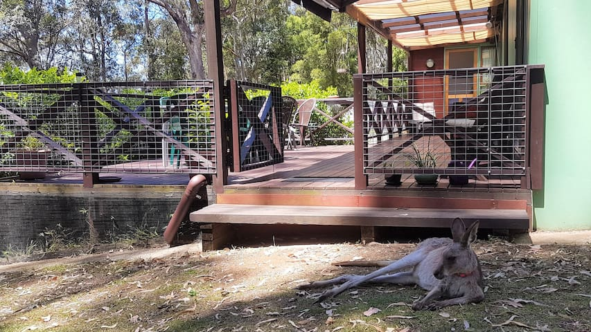 Rainforest Cabin