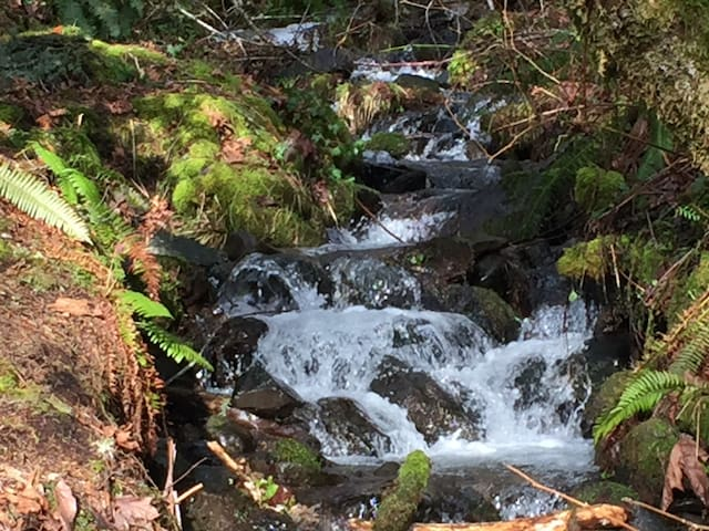 Creek Runs UNDER Our Cabin. Dog Ok - Rhododendron