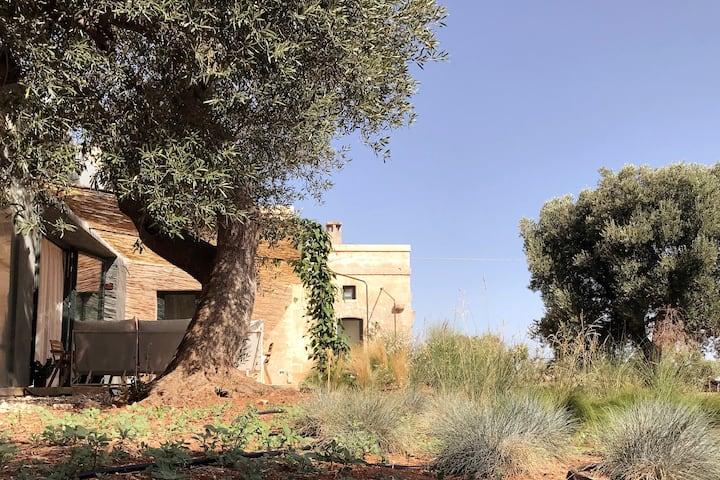 Lamia dal blu, design villa in the olive trees