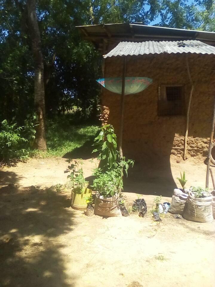 Mtomondoni villages. It in mtwapa  Mombasa  Kenya