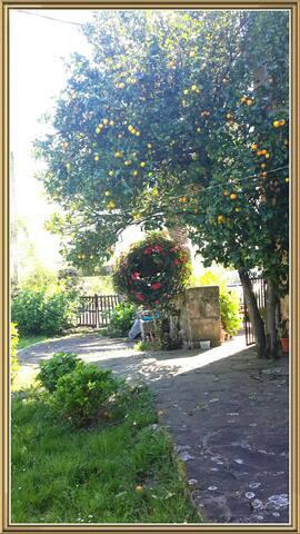 La palmera - San Vicente del Monte - Hus