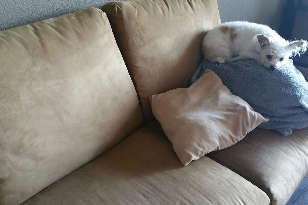Loveseat with firm cushions on wood base; does not fold out. Extra blankets, pillows, and sheets available if someone wants to sleep on it. Dog and dog pillow not included (they go with me).