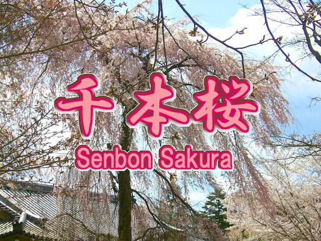 Uji,Sakura-senbon,Private room A