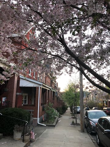 Our charming street, lined with turn-of-the-century brick row houses and trees. Just steps from bustling Butler Street.