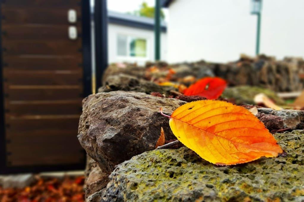 돌담위에도 가을...아니 겨울이 왔네요