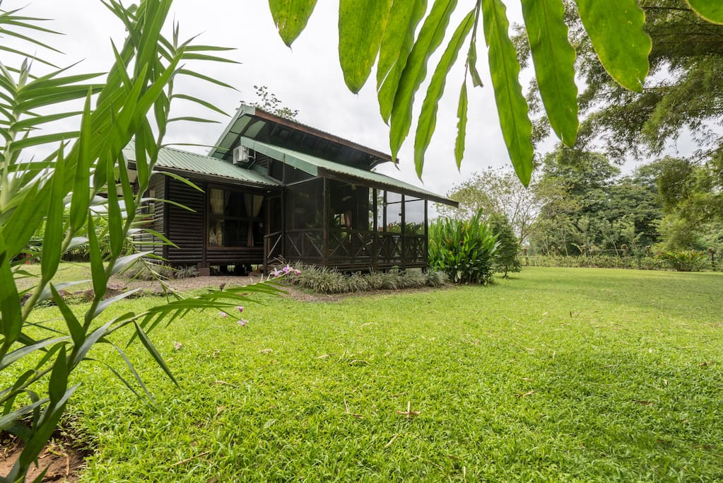 Open green areas to enjoy the magic of the rain forest