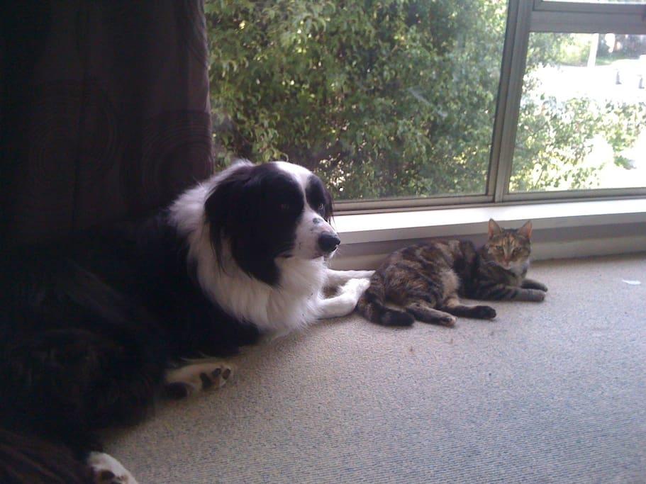 Taz and Tora
