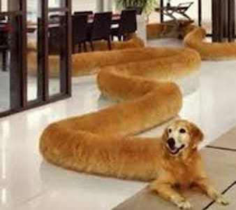 Long Boi's Couch  $FAKE$ - Jordan Valley - Bed & Breakfast