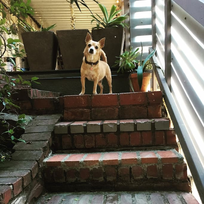 This is Banjo, our dog, greeting you on the front steps. Give him a treat and he'll be your friend - just like humans.