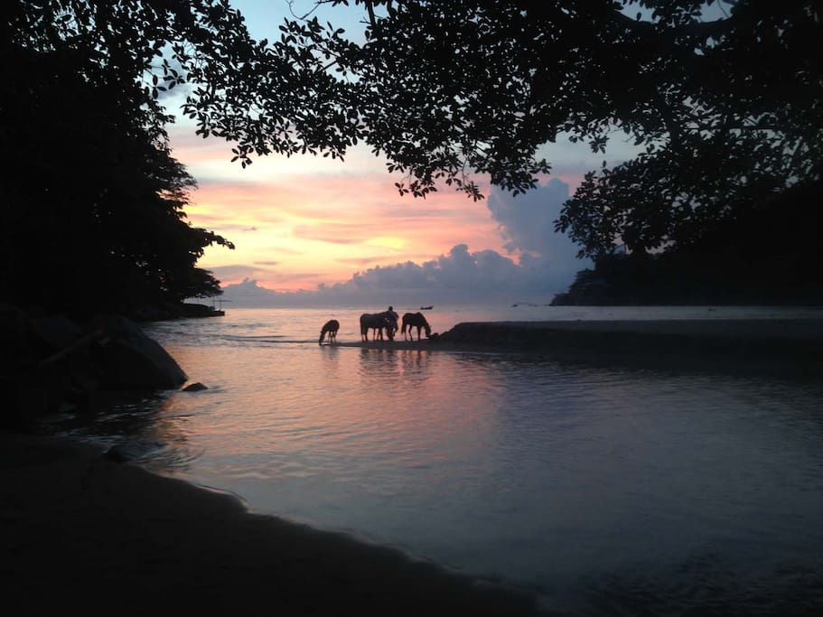 Sunset view toward the ocean and Pipo and his horses. He gives great tours!!