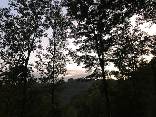View of the trees from the deck.