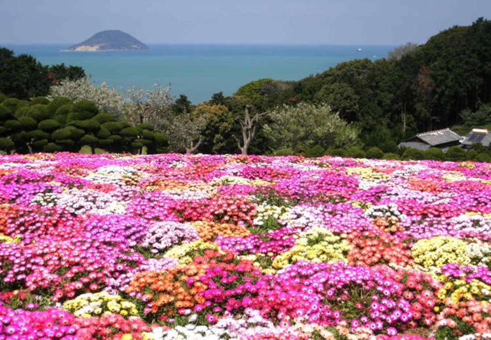 福岡では、いろんな花が綺麗な季節です! In Fukuoka, various flowers is a beautiful season! 후쿠오카에서는 여러가지 꽃이 예쁜 계절입니다!
