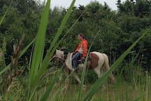 Polder, bos ruiterroute met gasten