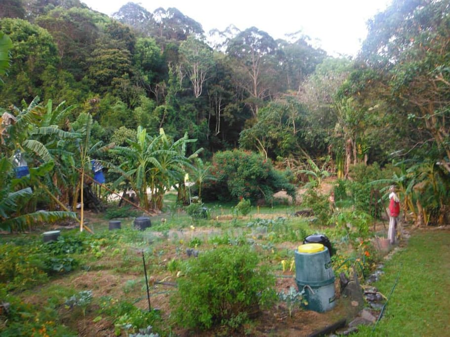 Organic kitchen garden around guest house available to guests for harvest of fresh produce