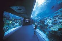 10 min from Aquarium of the Pacific, look for promo nights that are free, or include music concerts, etc during summer