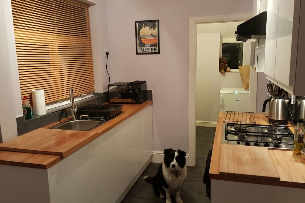 Kitchen + clean and friendly dog