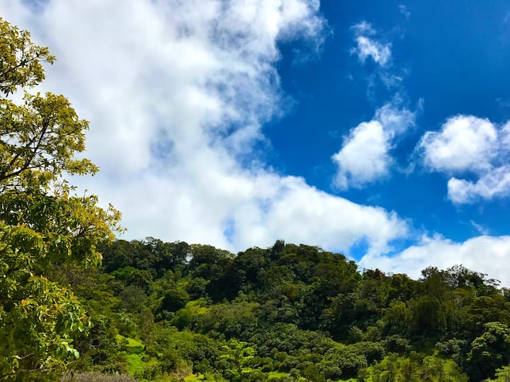 Cloud Forest Cottage Bugambilia #2
